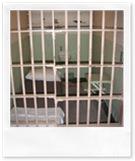 san-diego-prison